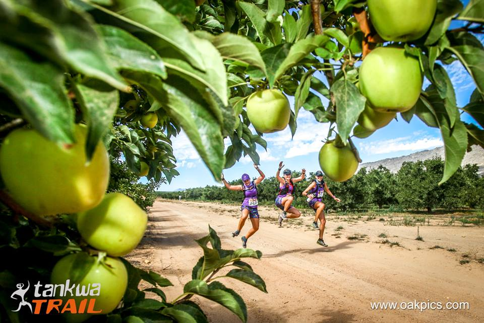 Running through the apple orchards.